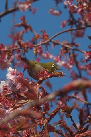 mejiro_20110227_2