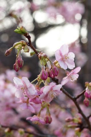 kawadu_20110227_1