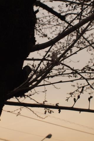 skuara_shinjo_20110403_7