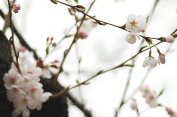 skuara_shinjo_20110403_1