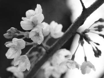 skuara_shinjo_20110403_2