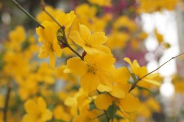 yellow_20110416_1
