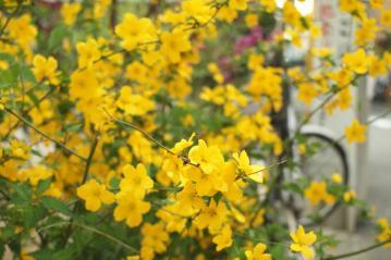 yellow_20110416_2