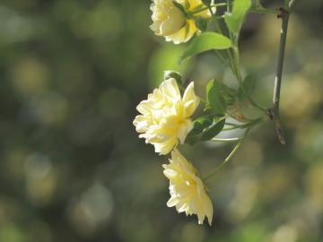 Yellow_20110424