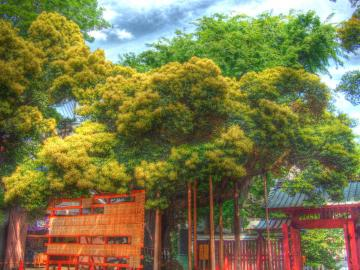 shi-noki_20110508_pic
