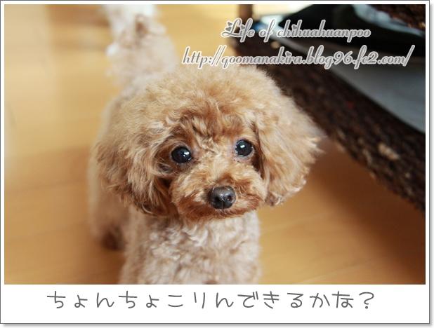 035_20110608201323.jpg
