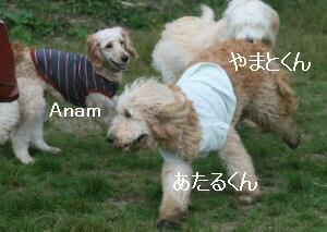 Anam.jpg