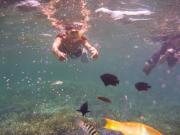 熱帯魚との戯れ