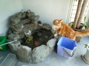 100912金魚とレオン