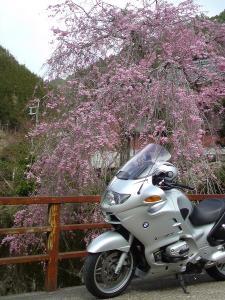 2011桜8