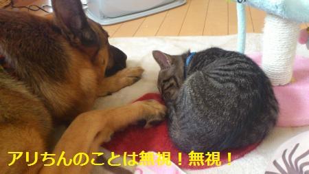 077_convert_20111231204835.jpg