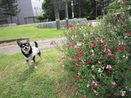 ネコを追いかけるイヌ2