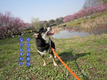 開花宣言4