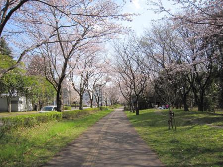 いろんな桜7