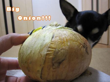 ドッキリ野菜1