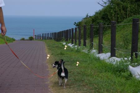 海岸を走ろう!3