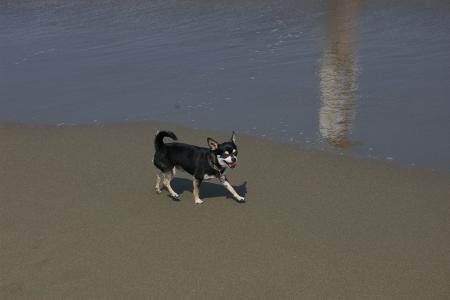 海岸を走ろう!5