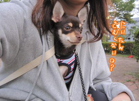 カンガルー犬。1