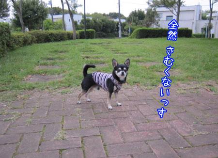 カンガルー犬。犬2