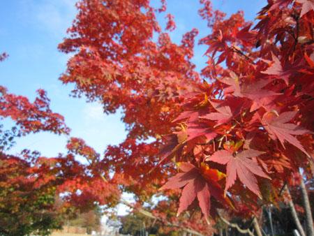 秋それぞれ。1