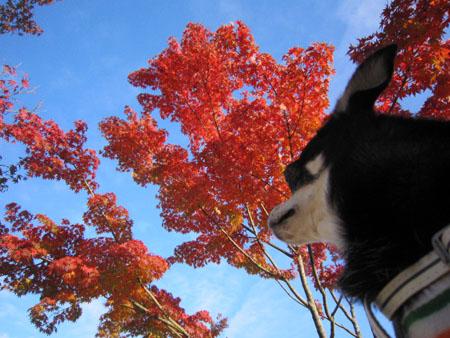 秋それぞれ。2