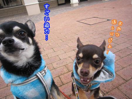 いきなりドライブ【プレミアムアウトレットあみ】4
