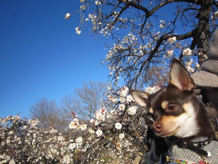 梅はすっぱい?2