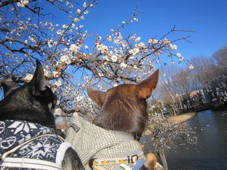 梅はすっぱい?3