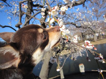 梅はすっぱい?6