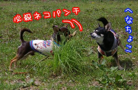お花見ダッシュ!9
