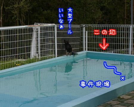 もう初泳ぎしちゃいました。【ドッグランひぬま】3