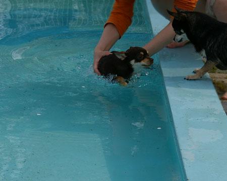 もう初泳ぎしちゃいました。【ドッグランひぬま】4