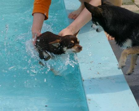もう初泳ぎしちゃいました。【ドッグランひぬま】6