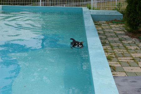 ラルフはプールサイドがお好き。2