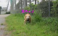 008_20100608232143.jpg