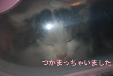 DSC_0735_20120108210742.jpg