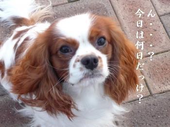 P1010047_convert_20100101171527.jpg