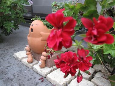雨でも歌ってる鉢植え君♪