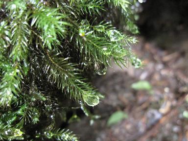 苔の雫を撮ったり。