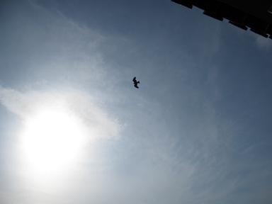 トンビが飛んでた~♪