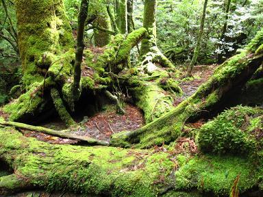 倒れても森の一部に。
