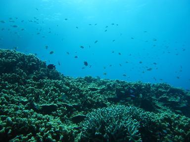 見事な珊瑚の山!