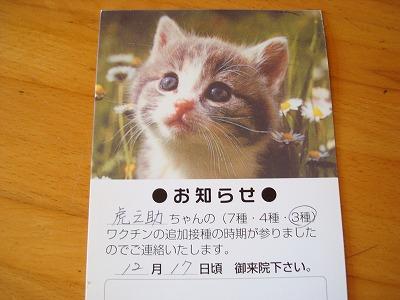 モデルの猫はかわいい!
