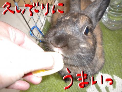 snap_reikirio_2009104184115.jpg