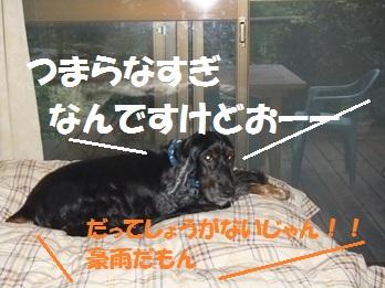 DSCF1601.jpg
