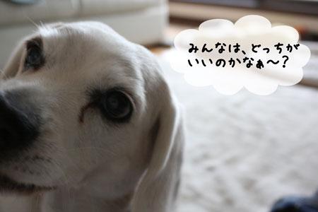 10_20100116175933.jpg