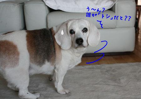 11_20100116183008.jpg