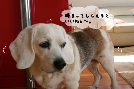 11_20110125161555.jpg