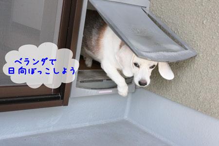 1_20091021135130.jpg