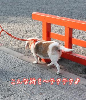 1_20091101135542.jpg